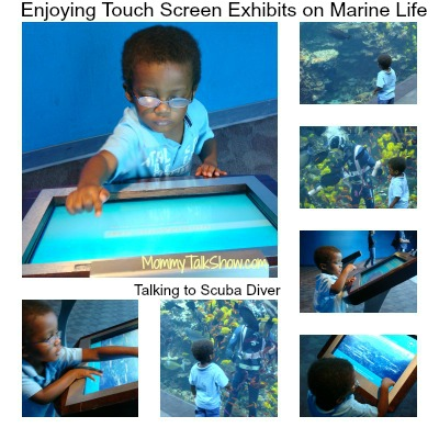 Georgia Aquarium, Georgia Aquarium Tickets, Visit Georgia Aquarium